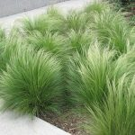 : Landscape grasses you can look perennial ornamental grasses you can look ornamental grasses for shade