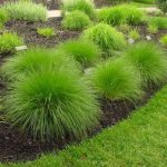 : Landscape grasses you can look tall ornamental grass plants you can look soft ornamental grasses you can look perennial grasses that grow in shade