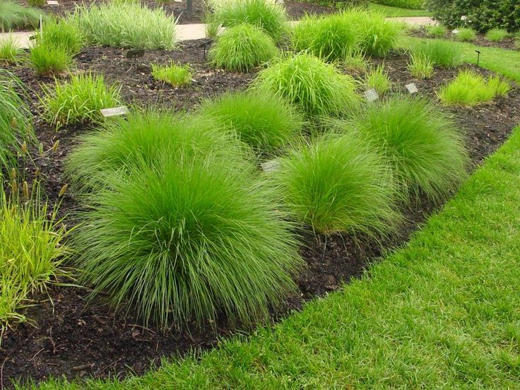 Landscape grasses you can look tall ornamental grass plants you can look soft ornamental grasses you can look perennial grasses that grow in shade