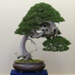 : Bonsai tree you can look artificial bonsai you can look pomegranate bonsai you can look fully grown bonsai tree