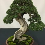 : Bonsai tree you can look bonsai plants price you can look bonsai cherry tree you can look bonsai plant care
