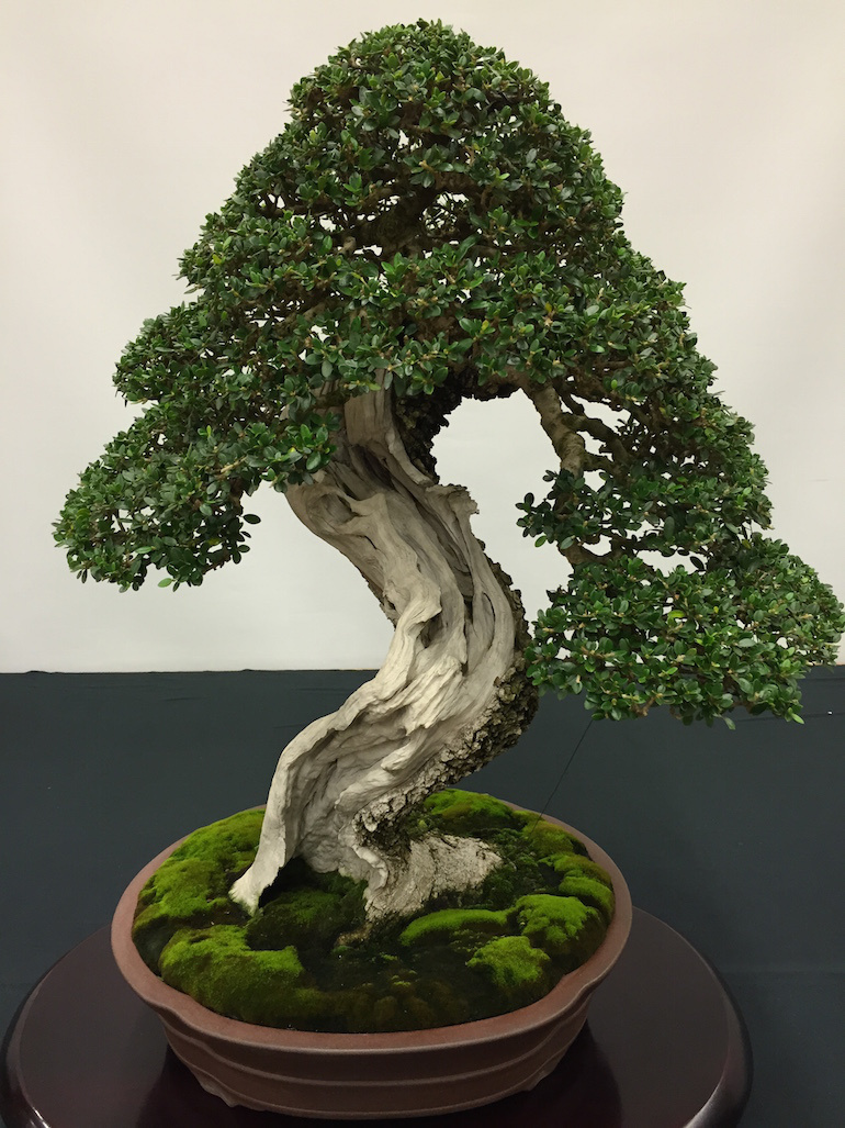 Bonsai tree you can look bonsai plants price you can look bonsai cherry tree you can look bonsai plant care