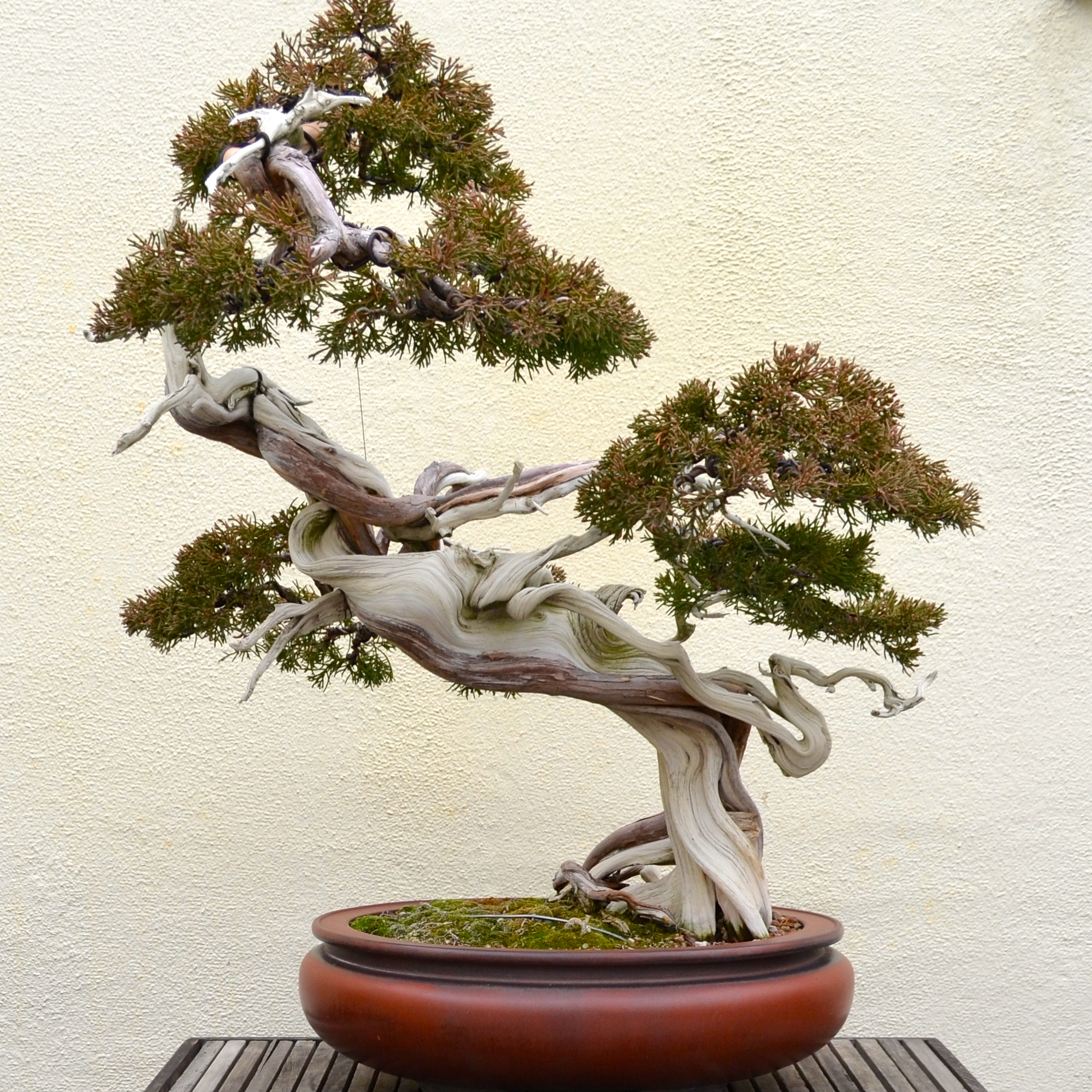 Bonsai tree you can look chinese bonsai you can look indoor bonsai tree care you can look bonsai scissors