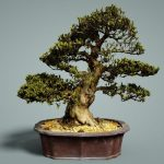 : Bonsai tree you can look indoor trees you can look chinese elm bonsai you can look bonsai tree types