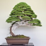 : Bonsai tree you can look what's a bonsai tree you can look plants for bonsai you can look bonsai tree garden