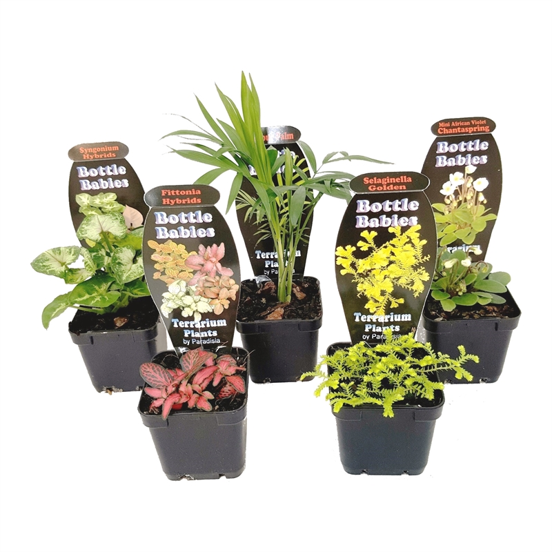 Terrarium plants be equipped best plants for an open terrarium be equipped terrarium ground cover be equipped unique glass containers for terrariums