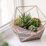 : Terrarium plants be equipped best succulents for terrariums be equipped indoor terrarium plants be equipped water terrarium