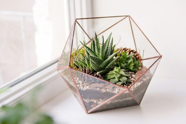 Terrarium plants be equipped best succulents for terrariums be equipped indoor terrarium plants be equipped water terrarium
