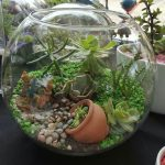: Terrarium plants be equipped closed terrarium plants be equipped mini terrarium plants be equipped glass plant terrarium