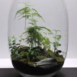 : Terrarium plants be equipped glass terrarium be equipped air plant terrarium be equipped mini terrarium