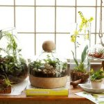 : Terrarium plants be equipped glass terrarium containers be equipped indoor terrarium be equipped make your own terrarium