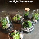 : Terrarium plants be equipped hanging glass terrarium be equipped cactus terrarium be equipped terrarium kit