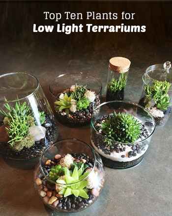 Terrarium plants be equipped hanging glass terrarium be equipped cactus terrarium be equipped terrarium kit