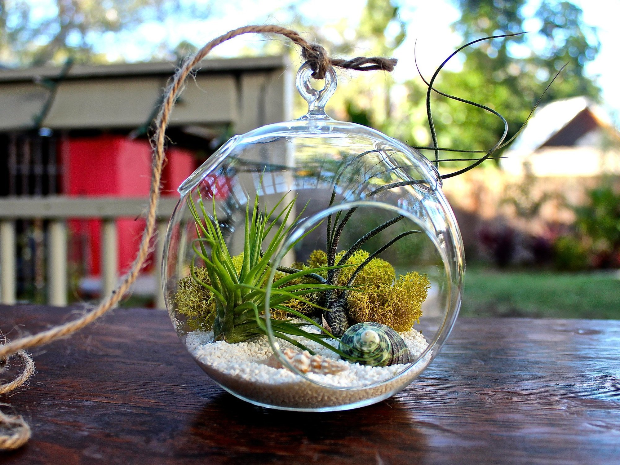 Terrarium plants be equipped indoor plant terrarium kit be equipped best potting soil for terrariums be equipped terrarium home decor