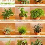 : Terrarium plants be equipped moss terrarium be equipped terrarium garden be equipped large terrarium be equipped miniature terrarium