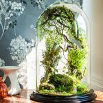 : Terrarium plants be equipped plant terrarium containers be equipped cheap terrarium plants be equipped plant in a jar
