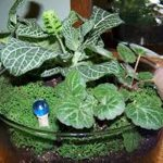 : Terrarium plants be equipped plants inside glass be equipped making a terrarium be equipped mini plants in glass