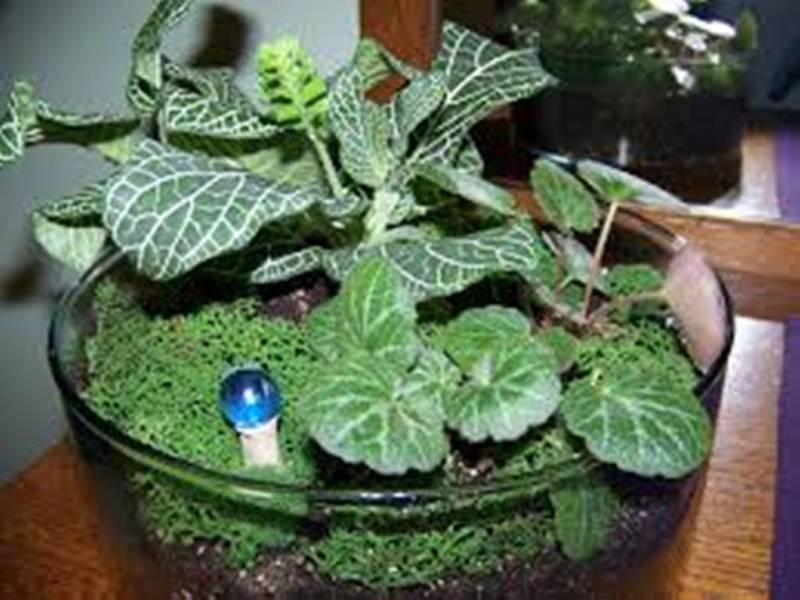 Terrarium plants be equipped plants inside glass be equipped making a terrarium be equipped mini plants in glass