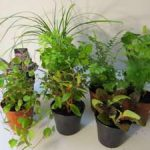 : Terrarium plants be equipped small ferns for terrariums be equipped where to buy small plants for terrariums