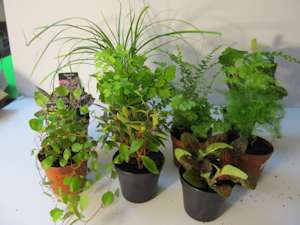 Terrarium plants be equipped small ferns for terrariums be equipped where to buy small plants for terrariums