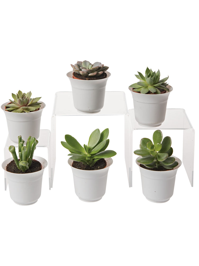 Terrarium plants be equipped succulent terrarium be equipped terrarium supplies be equipped small terrarium plants be equipped hanging terrarium