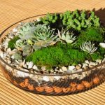 : Terrarium plants be equipped terrarium garden plants be equipped small succulent terrarium be equipped how to build a terrarium