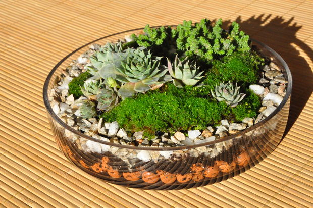 Terrarium plants be equipped terrarium garden plants be equipped small succulent terrarium be equipped how to build a terrarium