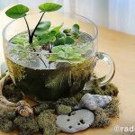 : Terrarium plants be equipped terrarium setup be equipped terrarium plants succulents be equipped tropical terrarium