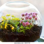 : Terrarium plants be equipped where to buy succulent terrarium be equipped large glass terrarium bowl be equipped dwarf plants for terrariums
