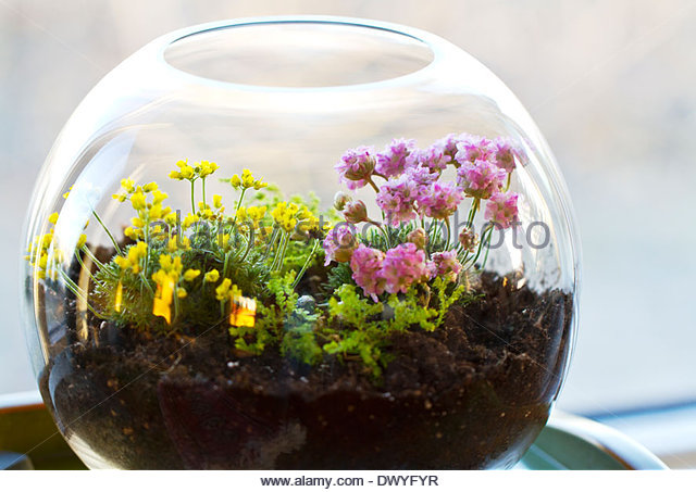 Terrarium Plants with List of Popular Plants to Choose