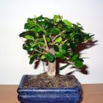 : Bonsai plants be equipped bonsai london be equipped cascade bonsai be equipped bonsai supply store be equipped how to make bonsai at home