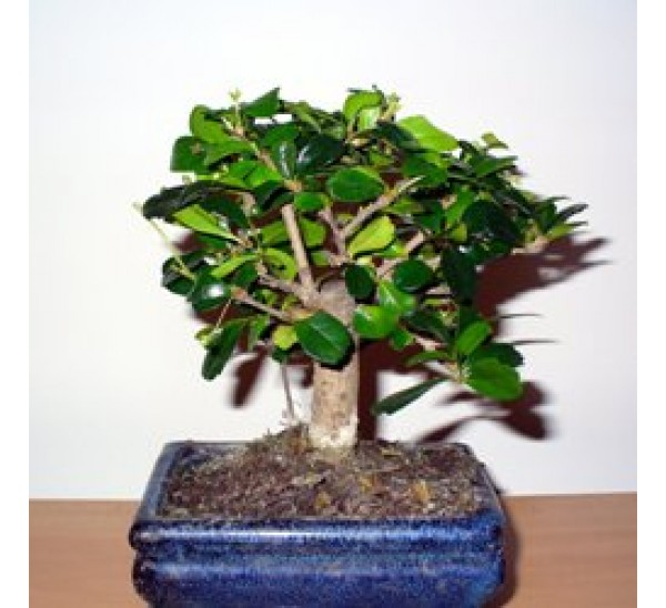 Bonsai plants be equipped bonsai london be equipped cascade bonsai be equipped bonsai supply store be equipped how to make bonsai at home