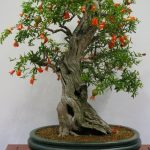 : Bonsai plants be equipped indoor bonsai be equipped azalea bonsai be equipped real bonsai tree