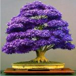 : Bonsai plants be equipped miniature bonsai be equipped japanese juniper bonsai be equipped purchase bonsai tree